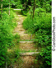 Trail in the woods -
