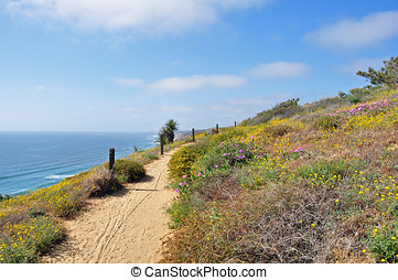 Trail in Torrey Pines