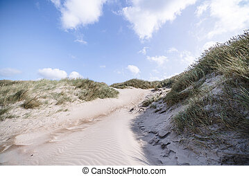 Trail on a Scandinavian beach with lyme grass in the summer...