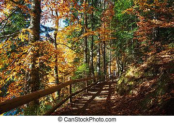 Trail path in coniferous deciduous forest park in autumn sun light