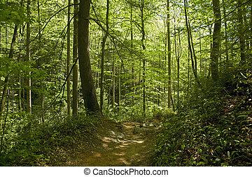 Trail, Pisgah Nat. Forest, Western NC - Trail, Pisgah...