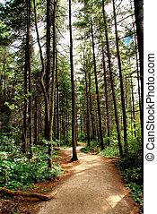 trail, skov