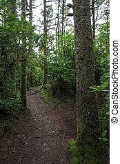 Trail Through Costal Forest