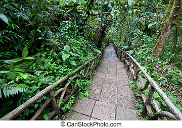 Trail through rainforest - Trail through a lowland tropical...
