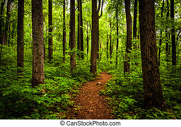 Trail through tall trees in a lush forest, Shenandoah...