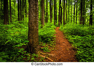 Trail through tall trees in a lush forest, Shenandoah National Park, Virginia.