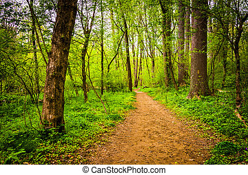 Trail through the forest at Lancaster County Central Park, Pennsylvania.