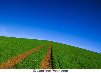 Trail through the green grassy field in summer day