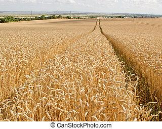 Trail through the Wheat Field