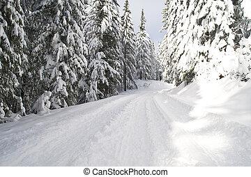 Trail through winter woods