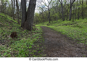 Trail Through Wooded Valley of Flandrau State Park