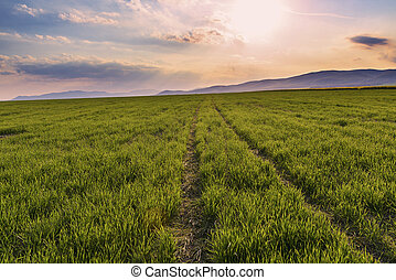 Trail to horizon on the green field on a sunset