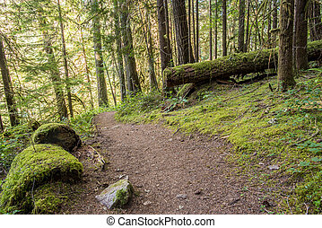 Trail Winds Through Thick Oregon Forest