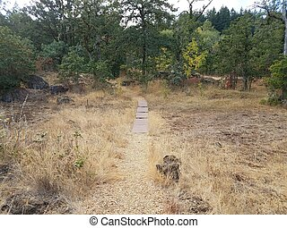 trail with brown grasses and trees outdoor