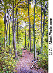 Trail with foliage in a forest in autumn
