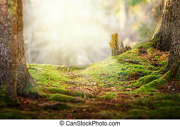 Backlight trail with no ending in forest with sunlight