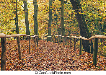 Trail with wooden fence in autumn forest.