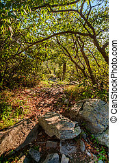Trail Woods Summer