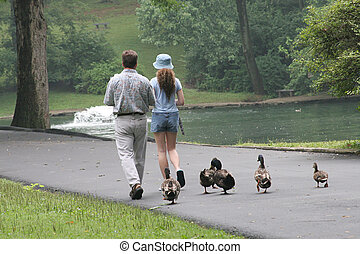 Trailing Duckies - A father and daughter in a park with a...