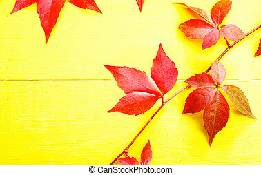 Trailing red virgina creeper showing off its autumn or fall colours against a bright yellow background with copyspace