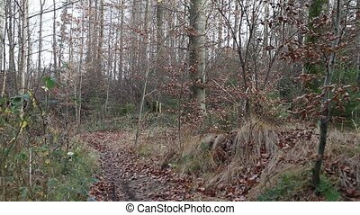 trailrunner in the forest