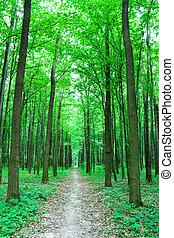trailway, en, bosque