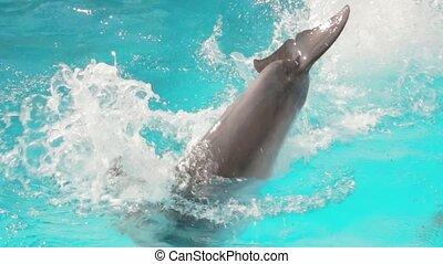 Trained Dolphin Swim - Trained dolphin swim in the swimming ...