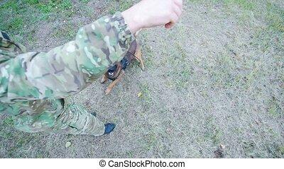 Trained sheepdog jumps up. Close up shot - Trained sheepdog...