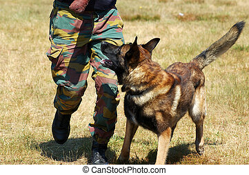 Military dog being trained. Safety, security concept.