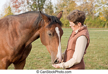 Trainer Feeding Beautiful Brown Horse Out of Her Hands