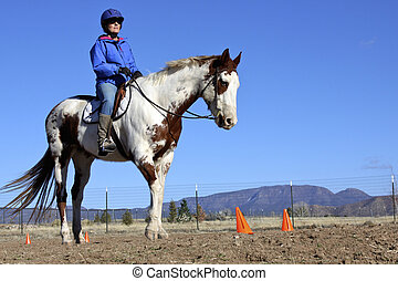 trainer, stute, pferd, farbe