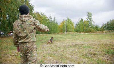 Trainer throws up the stick and trained sheepdog catches it....