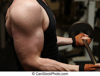 training barbell gym strength - bodybuilding workout in gym...