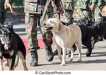 Training dogs of war - Army Soldier with dog, Training dogs...
