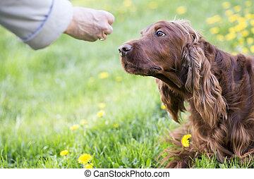 training, hund