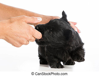 training, junger hund