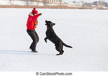 training, labrador, park, schwarzes mädchen, winter