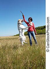 Training - summer, dog, pet, jump, animal, train, labrador,...