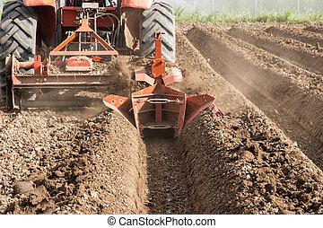 traktor, előkészítés, talaj, dolgozó, alatt, mező, agriculture.
