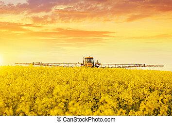 traktor, in, sprühen, der, oilseed vergewaltigung, farmland.