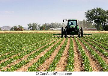 traktor, plöjning, den, fält