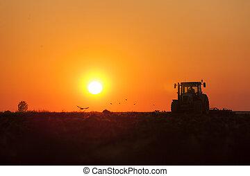 traktor, plöjning, in, skymning, på, solnedgång, med, kråkor