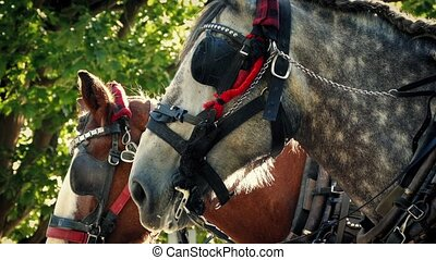 Tram Horses In The Park In Evening - Couple of horses with...