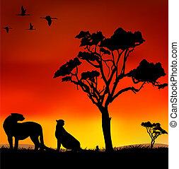 tramonto, africano