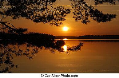 tramonto, albero