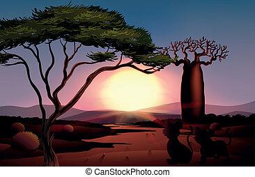 tramonto, animali, deserto