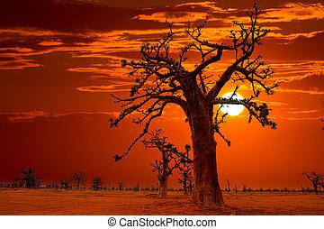 tramonto, baobab, africa, albero, colorito