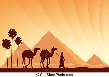tramonto, egitto, piramidi, fondo, cammello, grande, ...