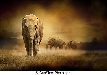 tramonto, elefanti