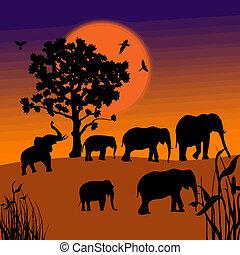 tramonto, in, il, savana